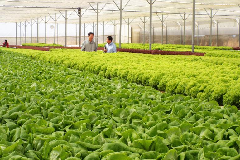 Đẩy mạnh ứng dụng công nghệ 4.0 trong phát triển nông nghiệp
