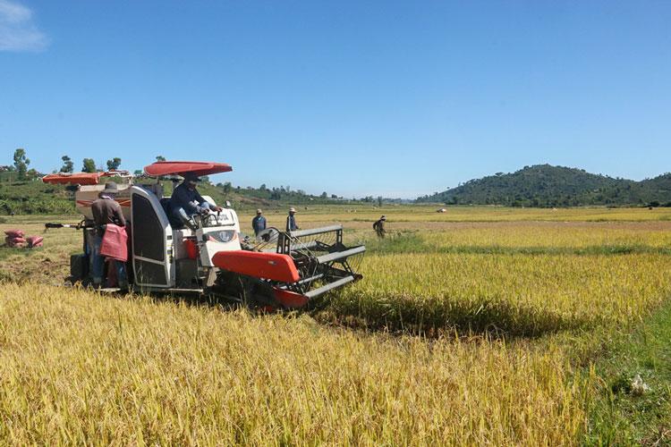 Tái cơ cấu ngành nông nghiệp: Bước chuyển biến mạnh mẽ